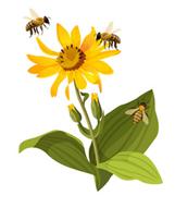 Пчелен прашец от пчеларска биоферма V&D